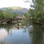 centro de fauna pont de suert